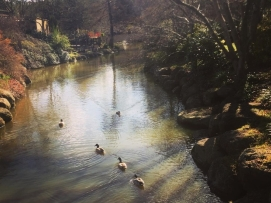 warren glen ducks